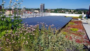 Solar panels and garden