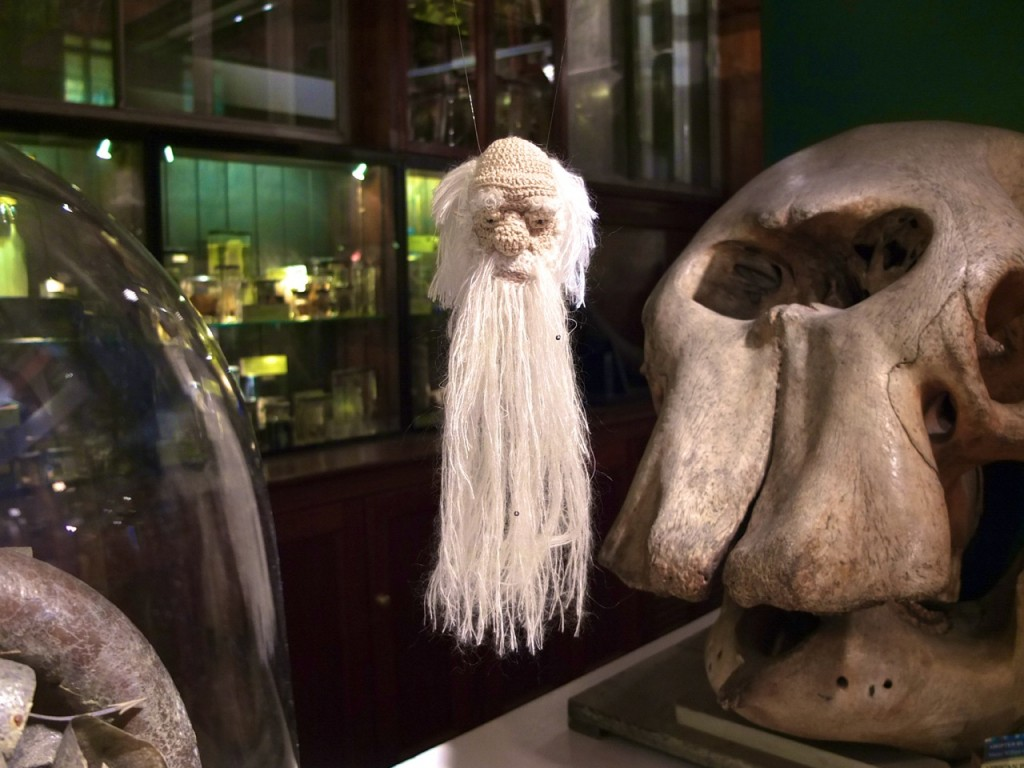 A crocheted portrait of charles Darwin by Cristina Amati on display in UCL's Grant Museum